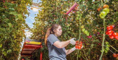 proyecto ruso de horticultura con led